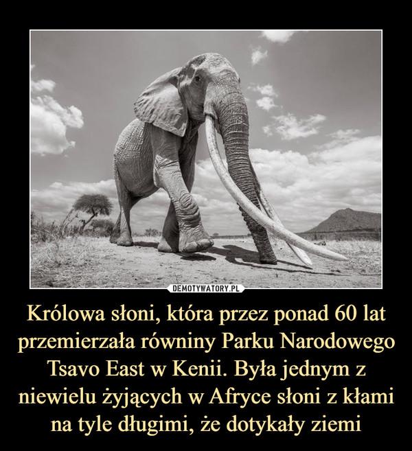 Królowa słoni, która przez ponad 60 lat przemierzała równiny Parku Narodowego Tsavo East w Kenii. Była jednym z niewielu żyjących w Afryce słoni z kłami na tyle długimi, że dotykały ziemi –