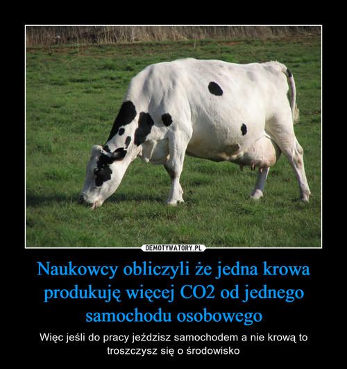 Naukowcy obliczyli że jedna krowa produkuję więcej CO2 od jednego samochodu osobowego