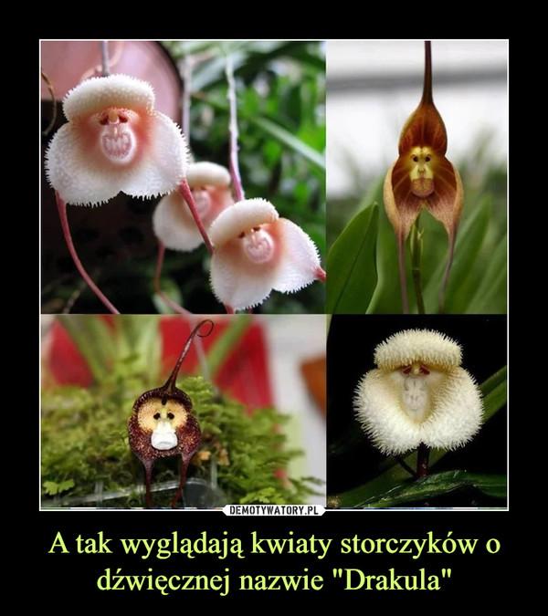 """A tak wyglądają kwiaty storczyków o dźwięcznej nazwie """"Drakula"""" –"""