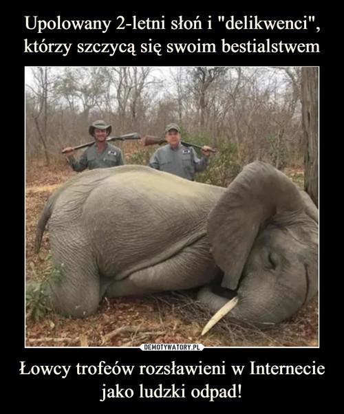 """Upolowany 2-letni słoń i """"delikwenci"""", którzy szczycą się swoim bestialstwem Łowcy trofeów rozsławieni w Internecie jako ludzki odpad!"""