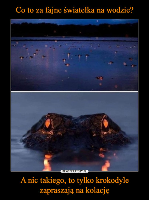 Co to za fajne światełka na wodzie? A nic takiego, to tylko krokodyle zapraszają na kolację