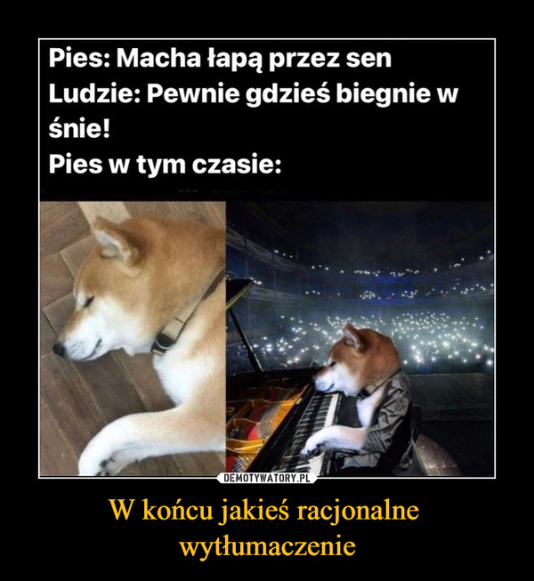 W końcu jakieś racjonalne wytłumaczenie –  Pies: Macha łapą przez senLudzie: Pewnie gdzieś biegnie wśnie!Pies w tym czasie: