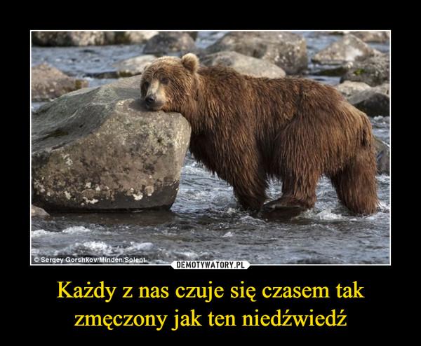 Każdy z nas czuje się czasem tak zmęczony jak ten niedźwiedź –