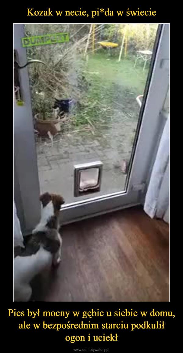 Pies był mocny w gębie u siebie w domu, ale w bezpośrednim starciu podkulił ogon i uciekł –
