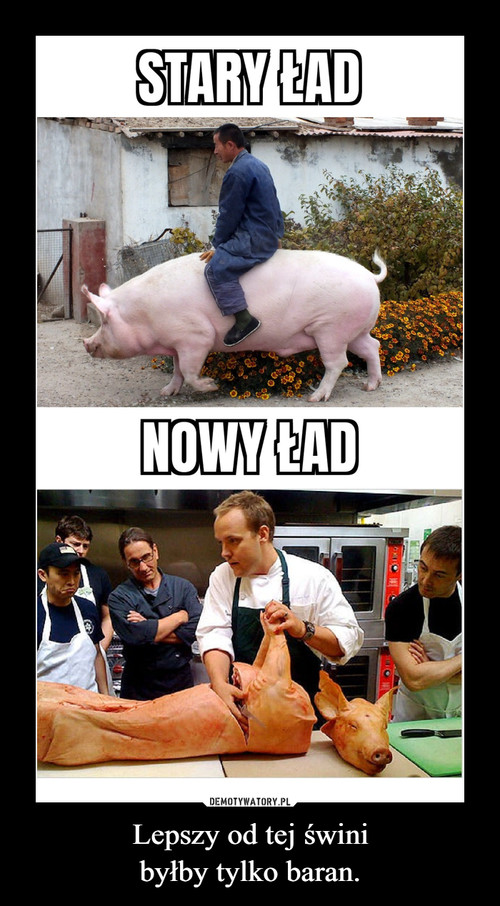 Lepszy od tej świni byłby tylko baran.