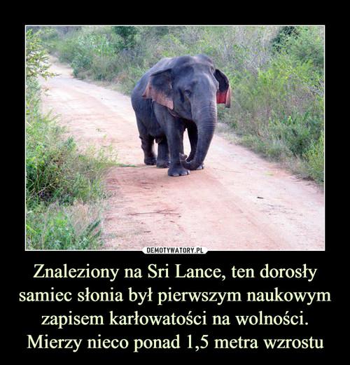 Znaleziony na Sri Lance, ten dorosły samiec słonia był pierwszym naukowym zapisem karłowatości na wolności. Mierzy nieco ponad 1,5 metra wzrostu