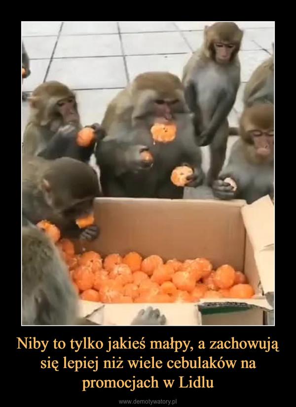 Niby to tylko jakieś małpy, a zachowują się lepiej niż wiele cebulaków na promocjach w Lidlu –