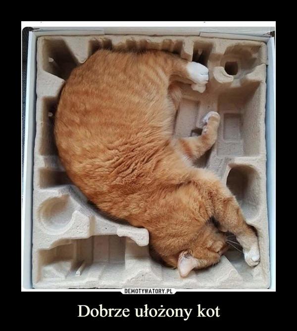 Dobrze ułożony kot